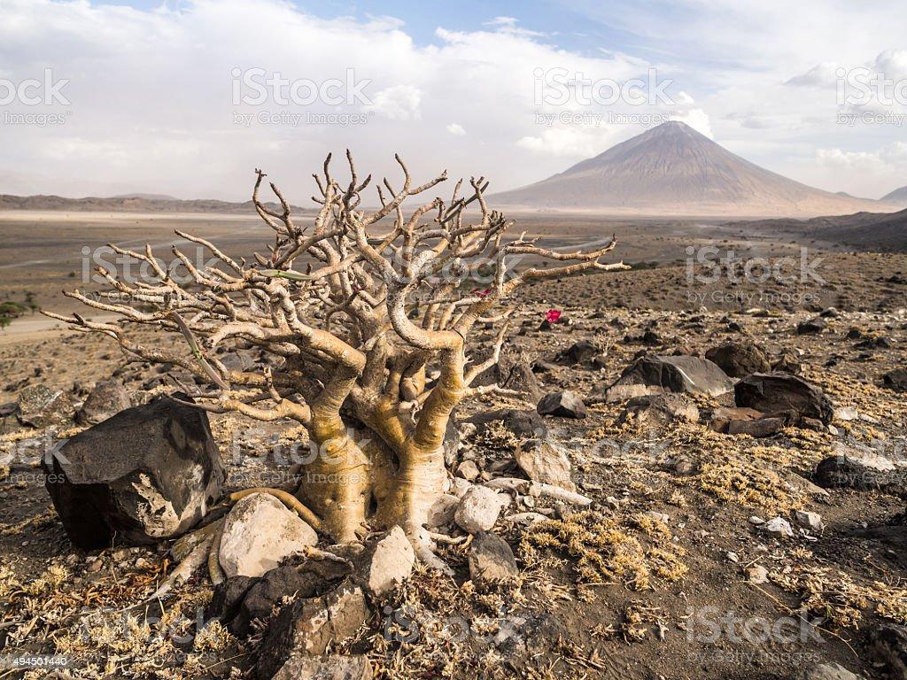 Arusha region, Tanzania, Africa stock photo