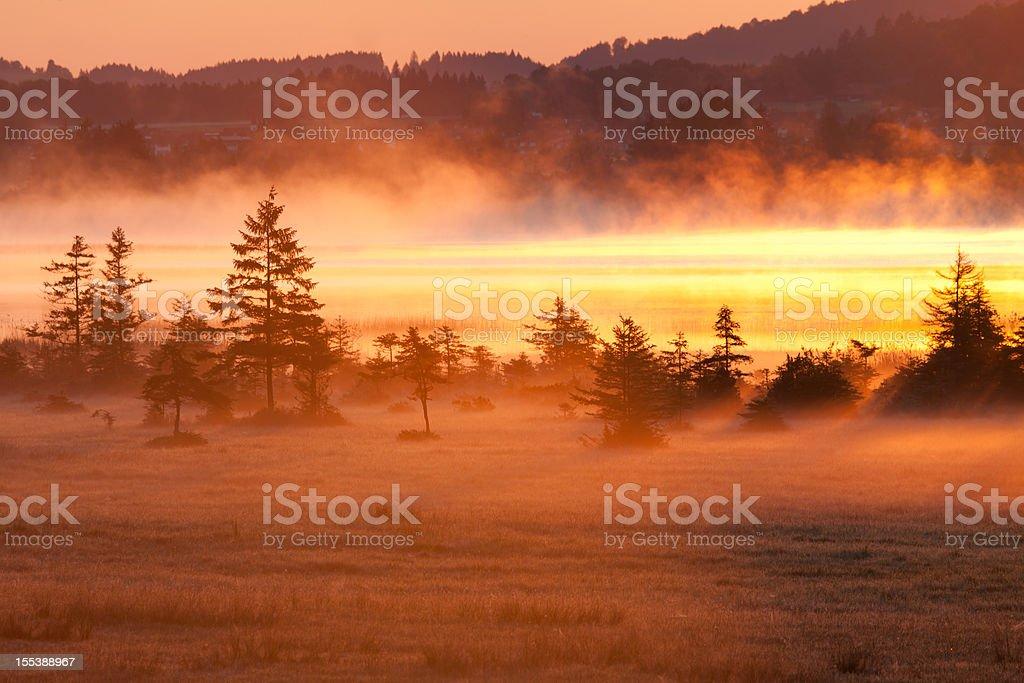 ascending fog above lake bannwaldsee in bavaria stock photo
