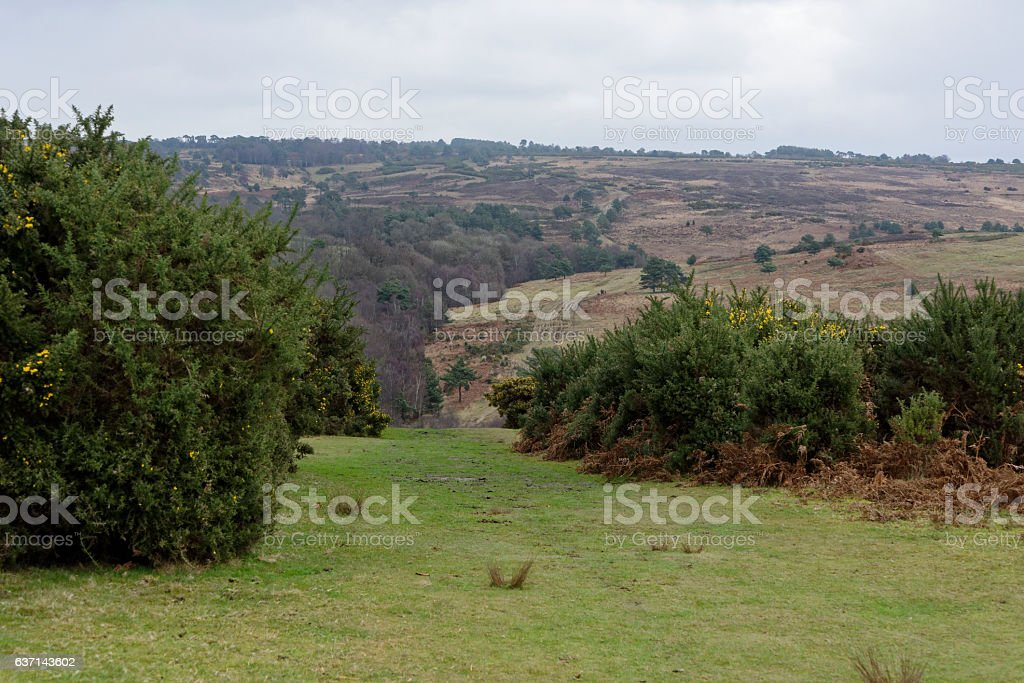Ashdown Forest in December. stock photo