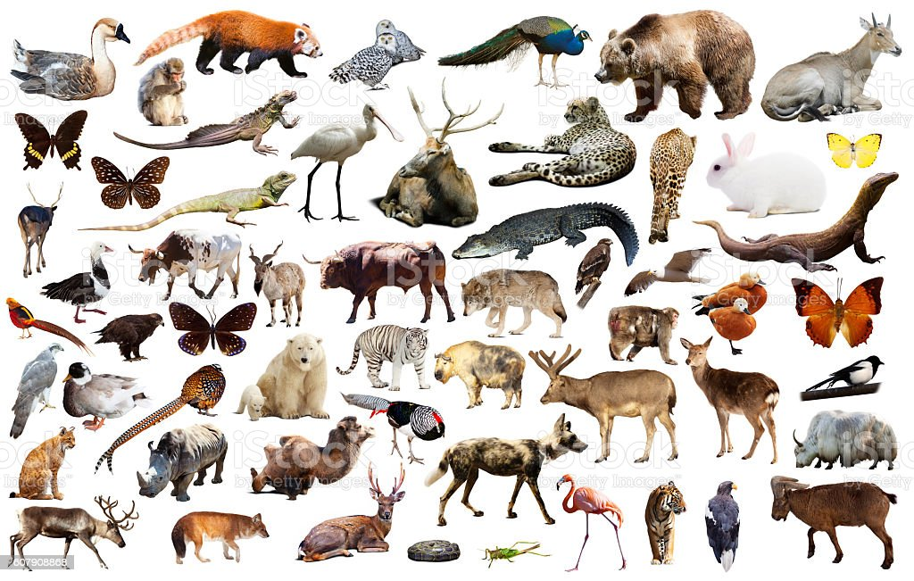 asia animals isolated stock photo