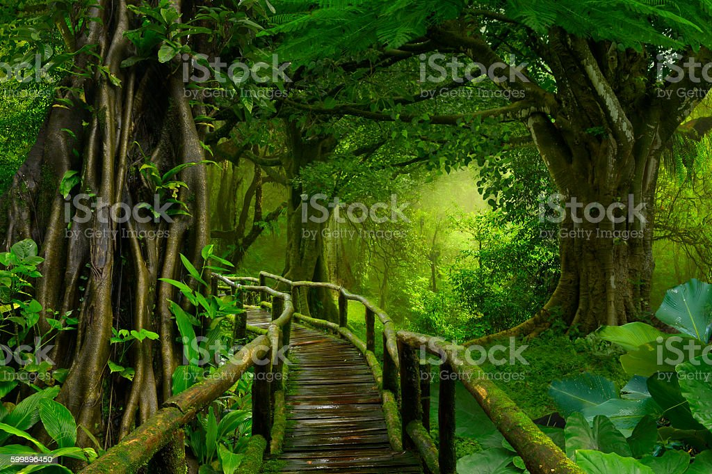 Asia jungle stock photo