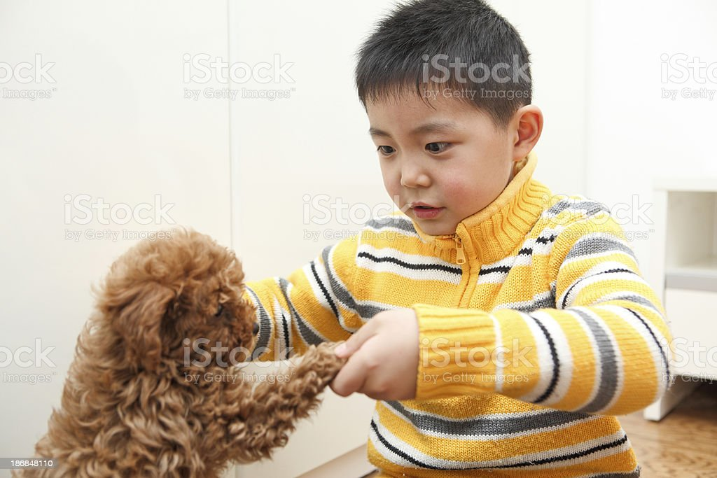 Asian boy and puppy playing in the home stock photo