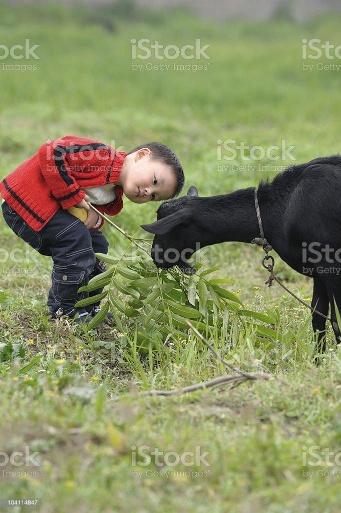 asian boy looking black goat royalty-free stock photo