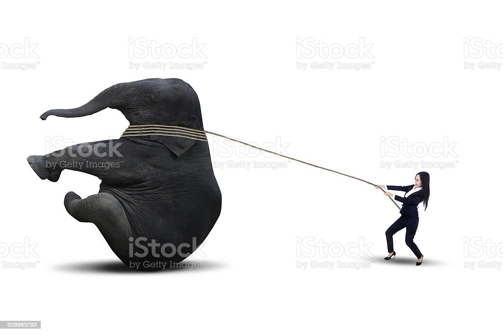 Asian businesswoman pulling elephant - isolated stock photo