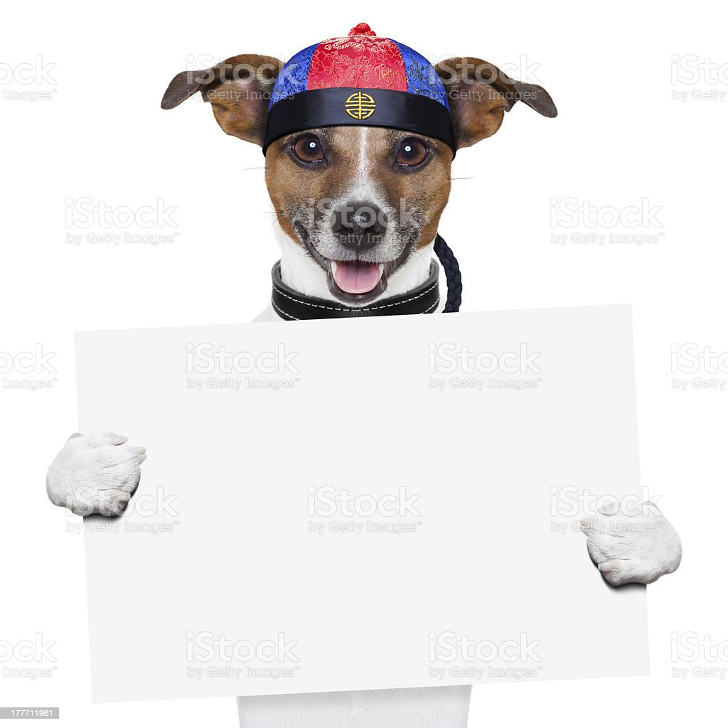 asian dogs royalty-free stock photo