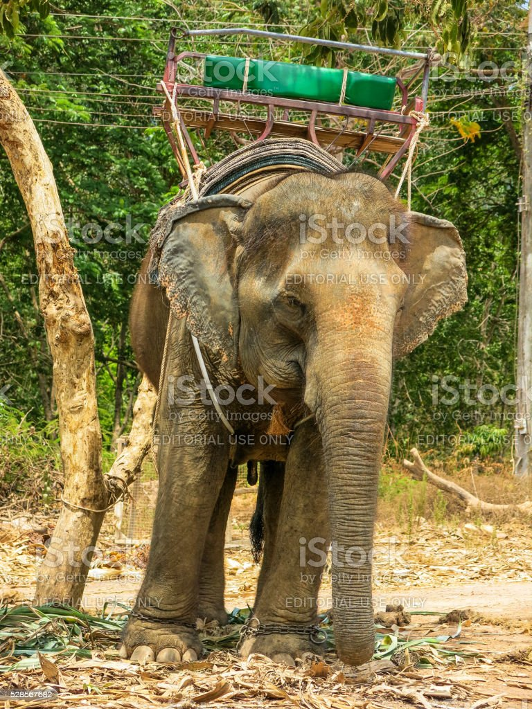 Asian Elephant Carrying Seat Rural Village in Thailand stock photo
