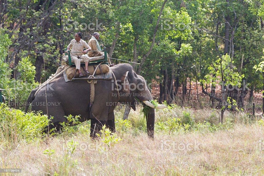 Asian Elephant in Bandhavgarh NP, India royalty-free stock photo