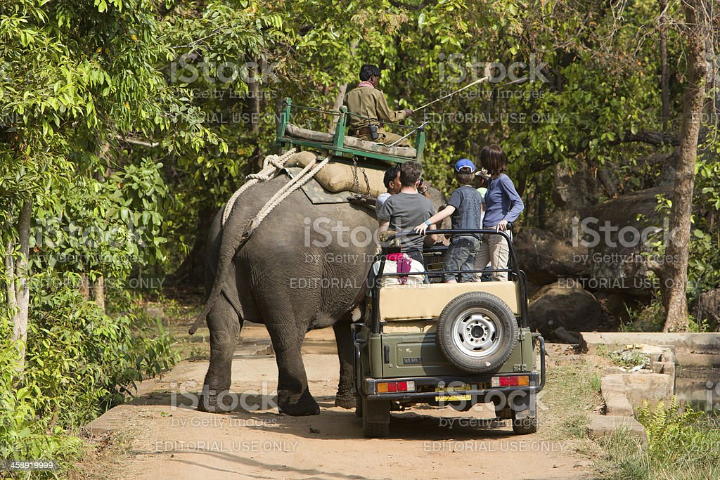 Asian Elephant in Bandhavgarh NP, India royalty-free stock photo