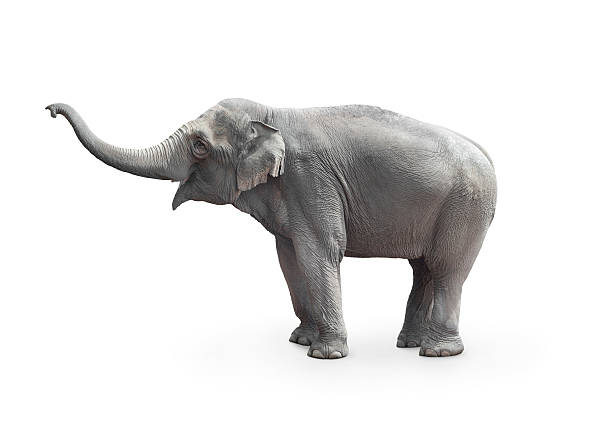 Elephant on Color By Number