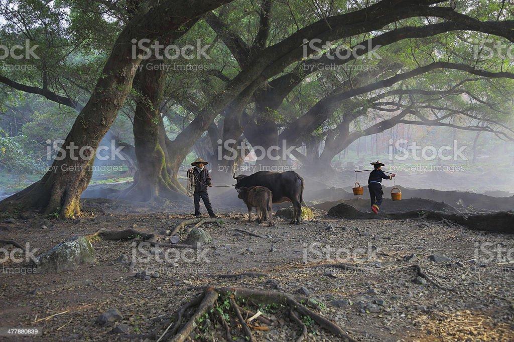 Asian farmer at morning royalty-free stock photo