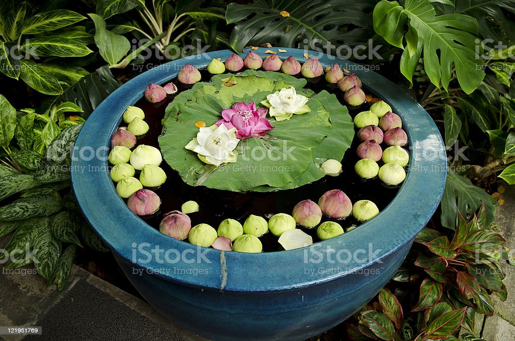 asian garden detail with flowers stock photo
