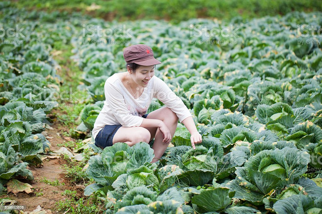 asian girl farmer working at cabbage field stock photo