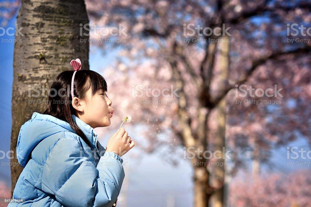 Asian girl under cherry trees stock photo