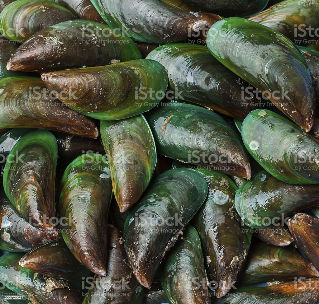 Asian green mussel was displayed and sale in Thailand market royalty-free stock photo