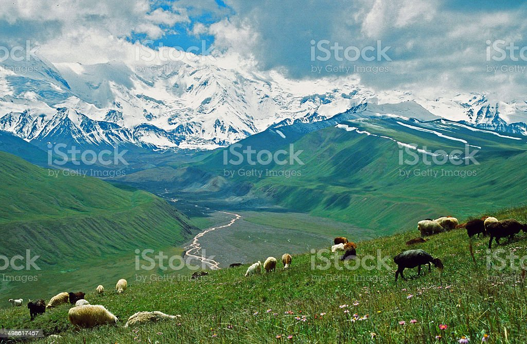 asian landscape -  steppe, sheep and pamir mountains stock photo