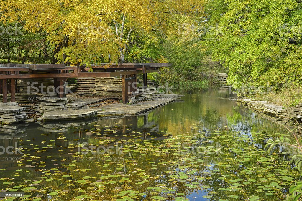 Asian Lilly pad pond stock photo