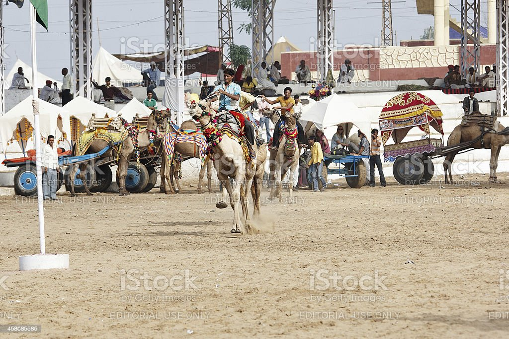 Asian men racing camels royalty-free stock photo