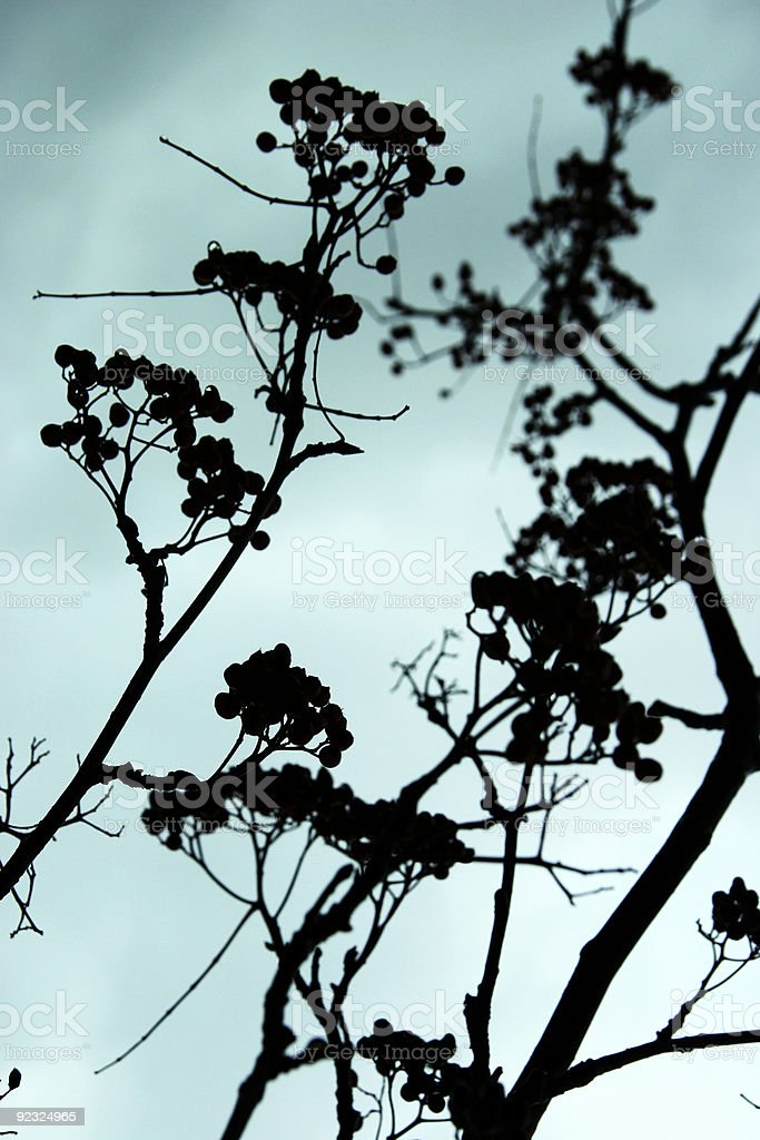 Asian Silhouette royalty-free stock photo