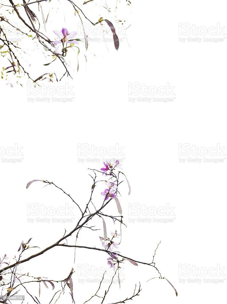 Asian spring royalty-free stock photo