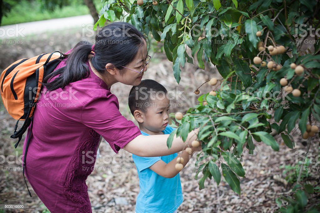 Asian woman and child in longan plantation stock photo