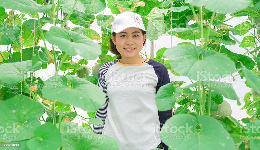 Asian woman farmer in melons greenhouse plant stock photo