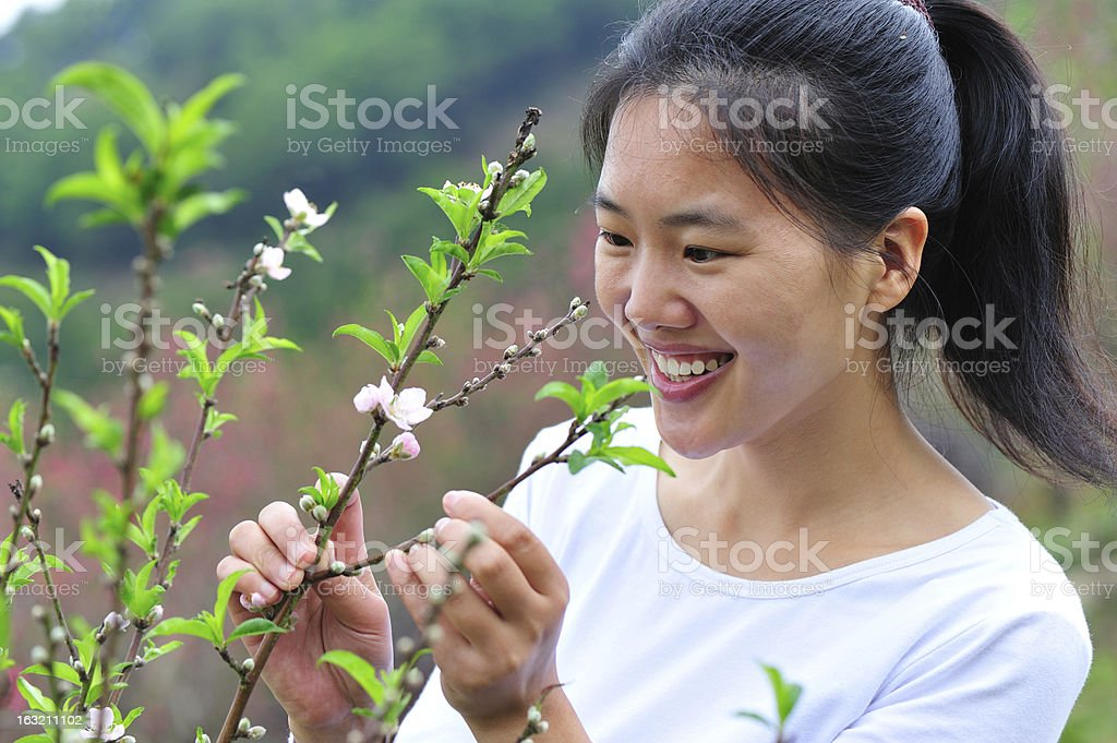 asian woman in peach flower garden royalty-free stock photo