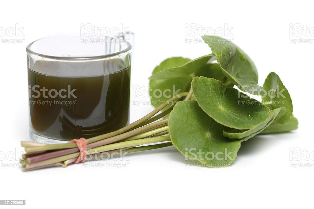 Asiatic Pennywort or Gotu Kola leaf and juice (Centella asiatica) stock photo