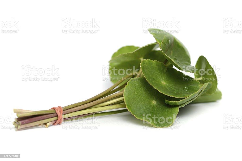 Asiatic Pennywort (Centella asiatica)or Gotu Kola leaf royalty-free stock photo