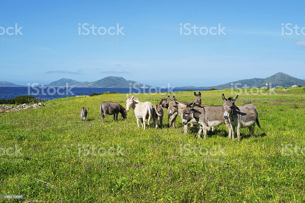 Asinara island in Sardinia, Italy stock photo
