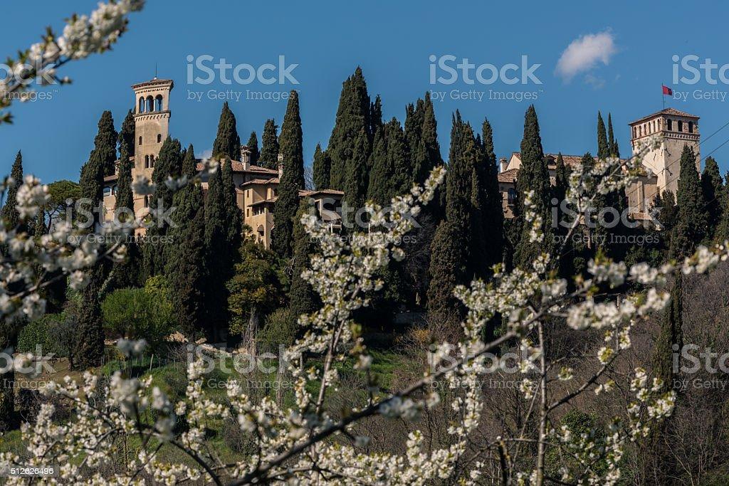 Asolo bloom stock photo