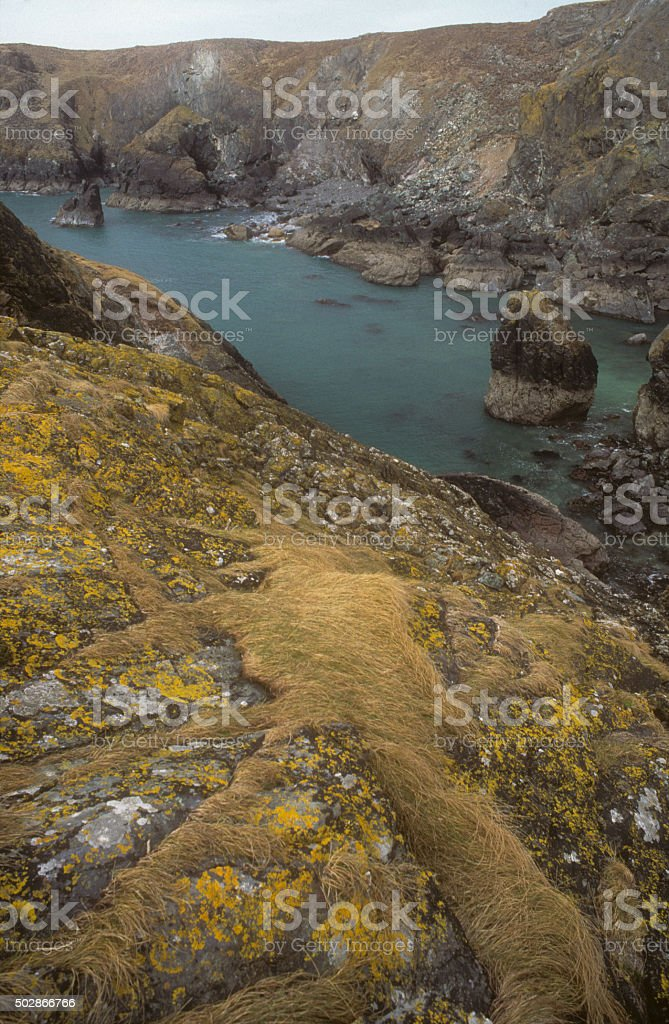 Asparagus Island Kynance Cove stock photo