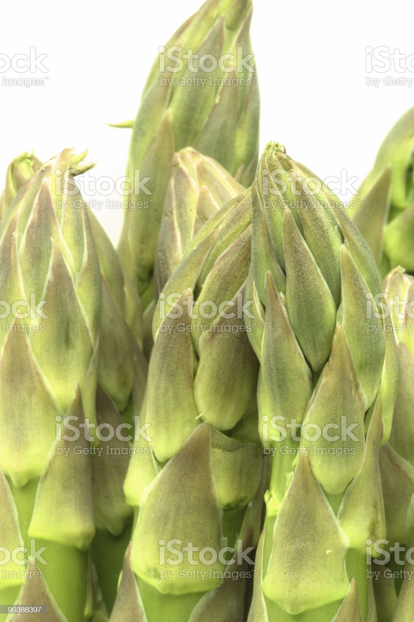 asparagus tips royalty-free stock photo