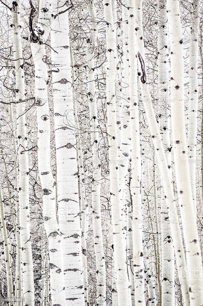 aspen abstract royalty-free stock photo