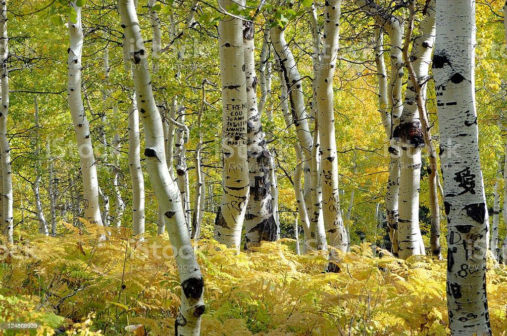 Aspen At Sundance V royalty-free stock photo