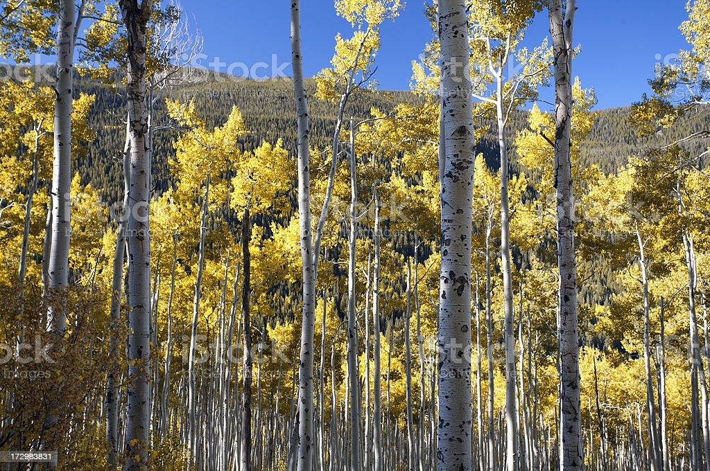 Aspen, Colorado foto stock royalty-free