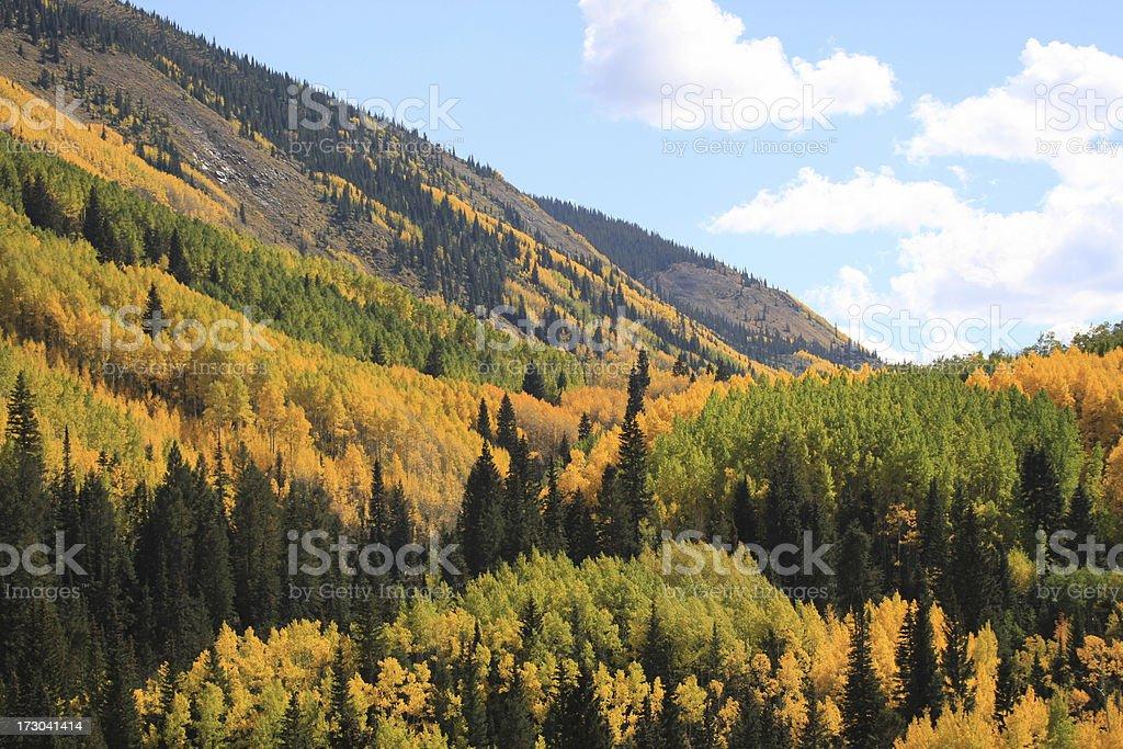 Aspen colori autunnali foto stock royalty-free