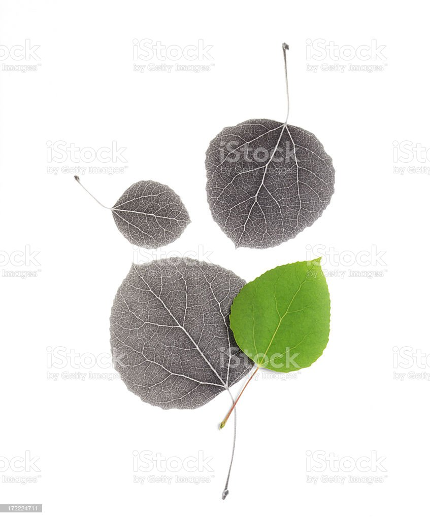 Aspen leaf IR Collage royalty-free stock photo
