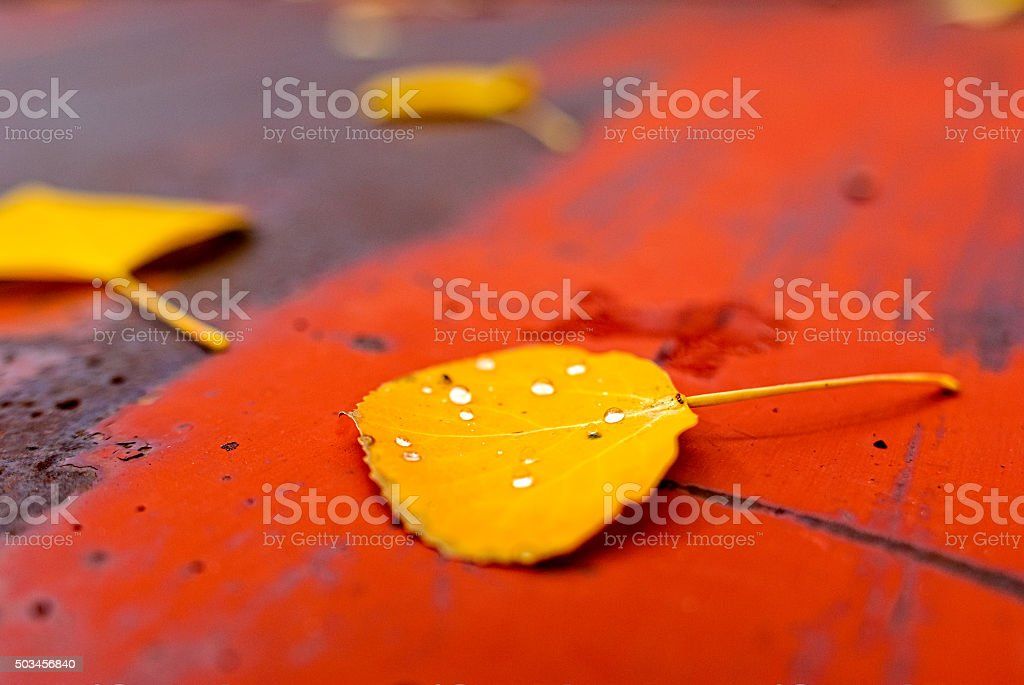 Aspen Leaves on Old Red Truck in Autumn stock photo