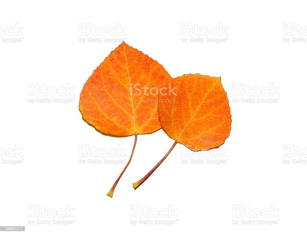Aspen Leaves royalty-free stock photo