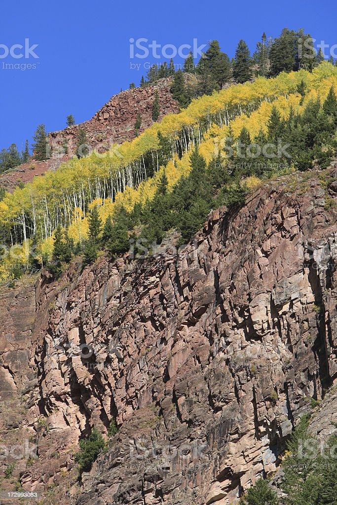 Aspen sulla Ridge foto stock royalty-free