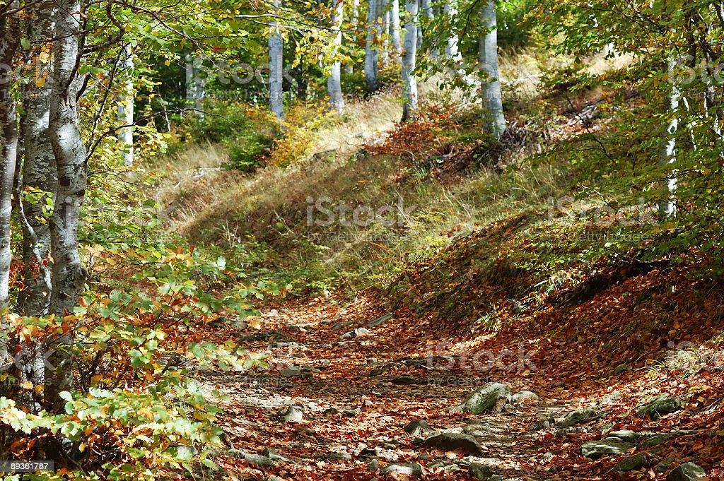 Aspen Trail stock photo