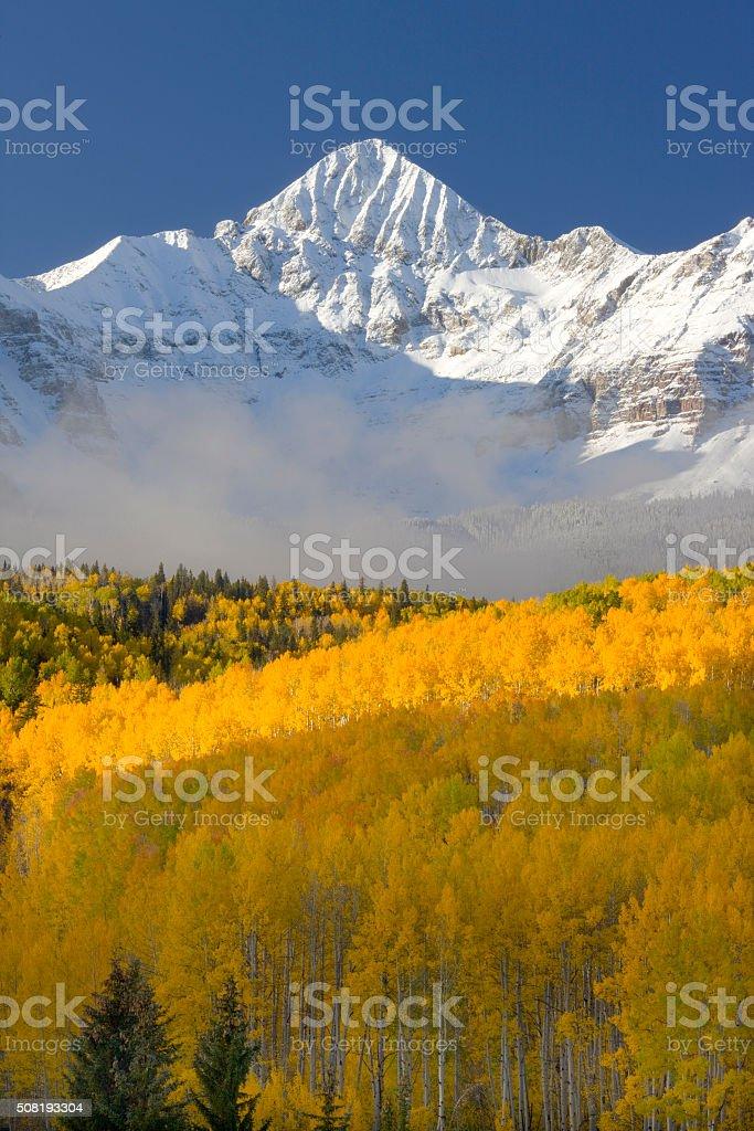Aspen Trees in Fall Colors stock photo