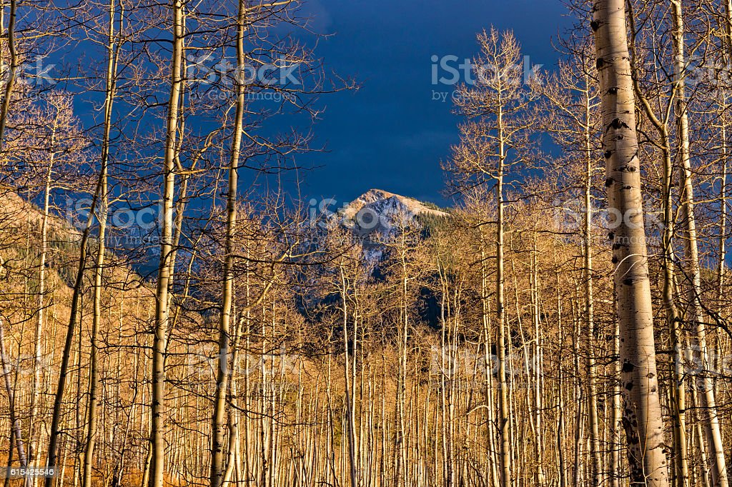 Aspen Trees with No Leaves and Mountain View Sunset stock photo