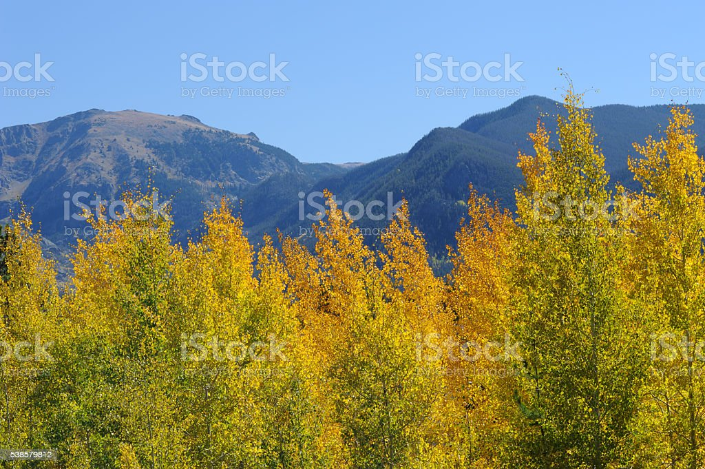 Aspens and Mountains stock photo
