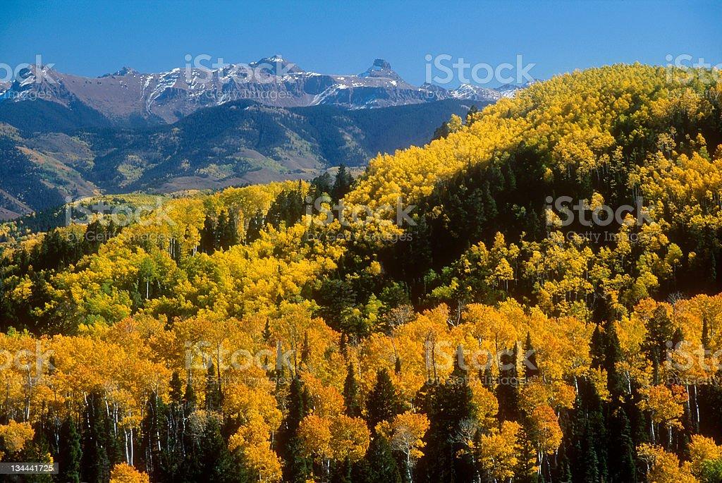 Aspens in Fall Colors San Juans Colorado Rocky Mountains stock photo