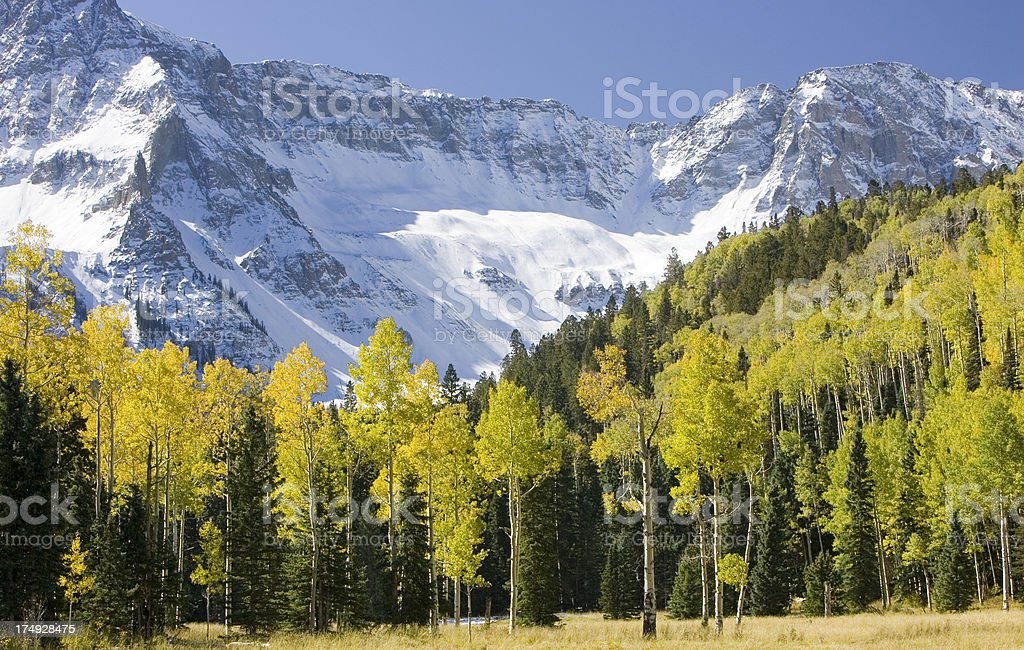 Aspens in the Rocky Mountains royalty-free stock photo