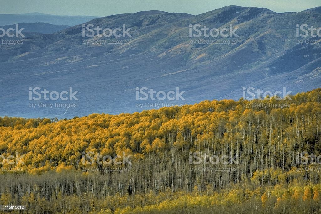 Aspens in the Valley - HDR Photo royalty-free stock photo