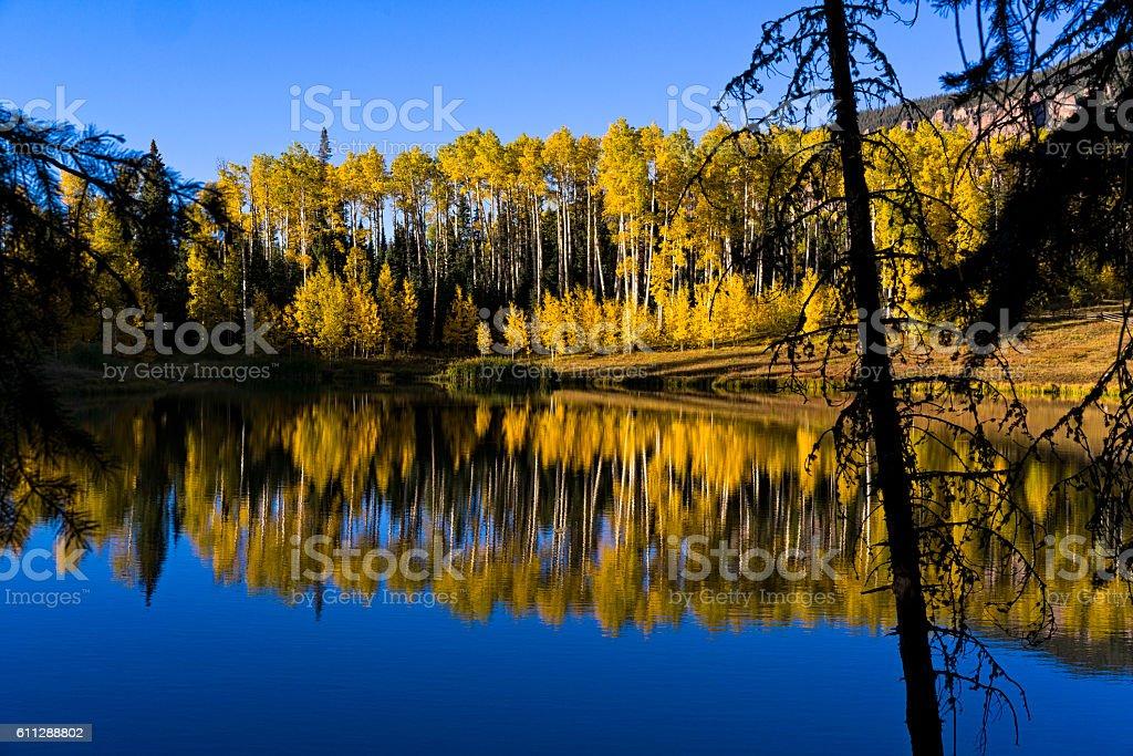 Aspens Reflecting in Mountain Lake stock photo