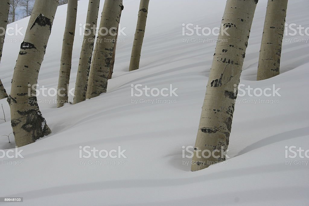 Aspens & Shadows royalty-free stock photo