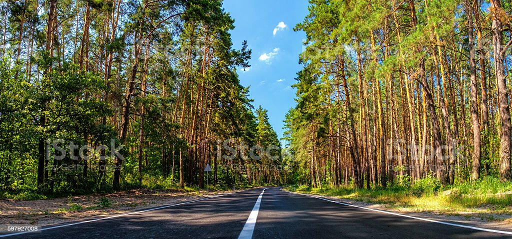 Asphalt road and a pine forest stock photo